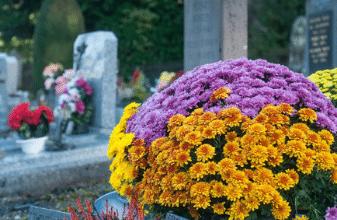 Démarches funéraires, Mairie de Mésanger